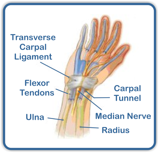 carpal tunnel symptoms - 550×530